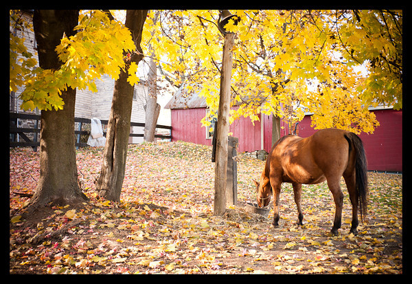 horse, leica, m8, stable, fall