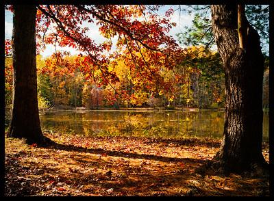 Fall Landscape Leica M8