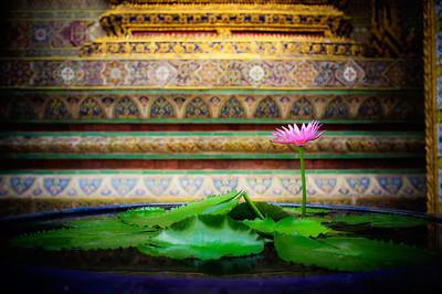 lotus flower thailand