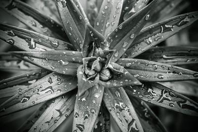 x100 macro plant